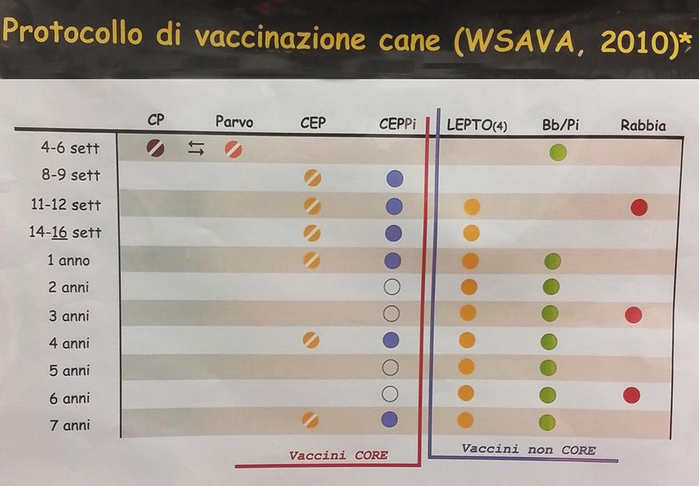 protocollo vaccinazione